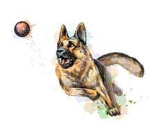 chien de berger allemand jouant et attrapant une balle à partir d'une éclaboussure d'aquarelle dessinée à la main illustration vectorielle de peintures vecteur