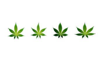 feuilles vertes de cannabis. Ensemble de feuilles de cannabis isolé sur fond blanc vecteur