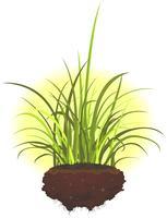 Feuilles d'herbe et racines
