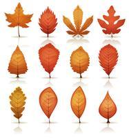 Set de feuilles d'automne vecteur