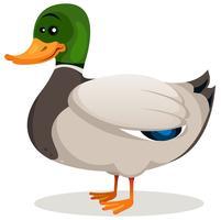 Canard colvert de dessin animé