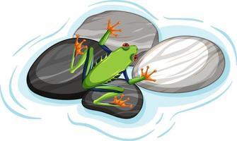 Vue de dessus d'une grenouille verte sur des feuilles de pierres isolées vecteur