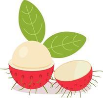 ramboutan avec des feuilles et des fruits blancs isolés background.vector illustration.ramboutan divisé en deux vecteur