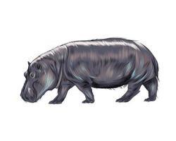 hippopotame d'une touche d'aquarelle, dessin coloré, réaliste. illustration vectorielle de peintures vecteur