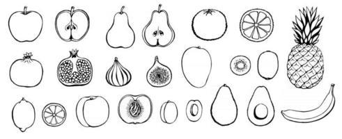jeu d'icônes de fruits dessinés à la main de vecteur. menu de restaurant de produits agricoles de collection de style rétro décoratif, étiquette de marché. vecteur