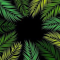 palmier feuille silhouette fond vecteur cadre