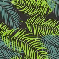 palmier feuille silhouette fond vecteur illustrat