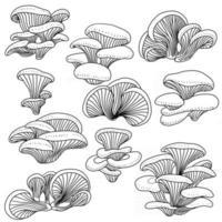 doodle croquis à main levée ensemble de collection de dessins de légume de pleurotes. vecteur