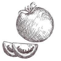 Croquis de dessin de contour de carotte isolé sur fond blanc, illustration vectorielle stock, pour la conception et la décoration, autocollant, modèle, vintage, bannière, légumes vecteur