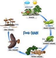 concept de diagramme de chaîne alimentaire vecteur