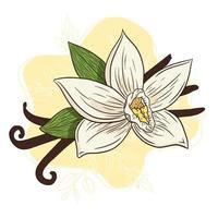 illustration d'arôme d'épices à la vanille de dessin au trait vecteur