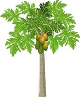 Un papayer style cartoon isolé sur fond blanc vecteur