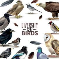Composition du cadre de la diversité des oiseaux vector illustration