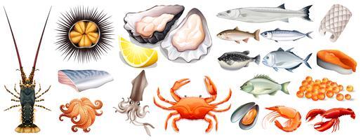 Ensemble de différents types de fruits de mer vecteur
