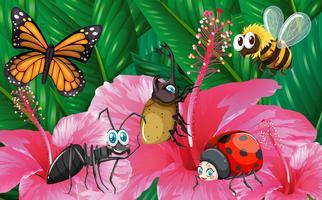 Différents types d'insectes dans le jardin