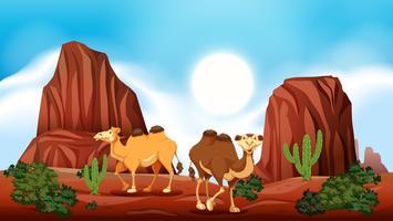 Rock Mountain dans le désert et les chameaux