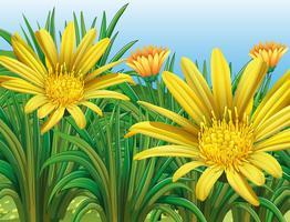 Fleurs jaunes dans le champ vecteur
