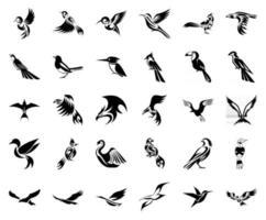 ensemble d'icônes solides d'oiseaux vecteur