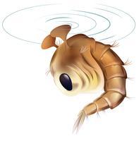 Cycle de vie des moustiques - stade des nymphes vecteur