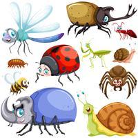 Différents types d'insectes