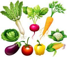 Toutes sortes de légumes vecteur