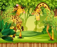 Girafe dans la jungle