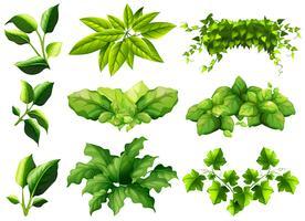 Différents types de feuilles vecteur