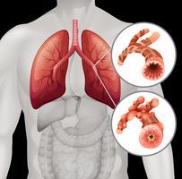 Anatomie humaine avec gros plan vecteur