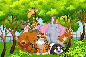 Animaux sauvages dans la nature vecteur
