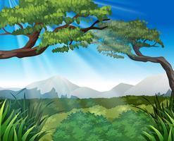 Scène de la nature avec des arbres sur les montagnes