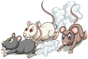 Trois rats vecteur