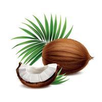 illustration vectorielle de noix de coco image réaliste vecteur