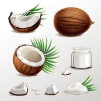 illustration vectorielle de noix de coco ensemble réaliste vecteur