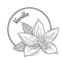 modèle de logo et emblème de fleur de vanille de style vintage vecteur