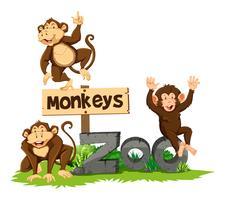 Trois singes au zoo vecteur