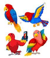 Jeu de perroquet vecteur