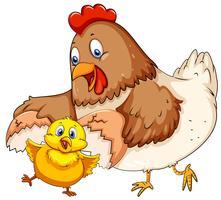 Mère poule et petit poussin