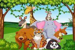 Animaux sauvages dans la forêt vecteur