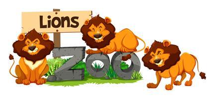 Trois lions au zoo vecteur