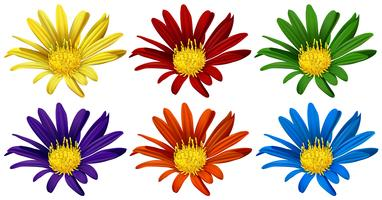 Fleurs en six couleurs différentes vecteur
