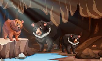 Ours sauvage vivant dans la grotte