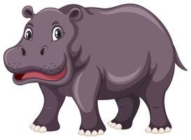 Hippo mignon sur fond blanc vecteur
