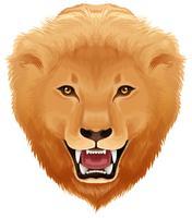 Tête de lion fond blanc