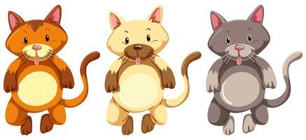 Trois petits chatons au visage idiot