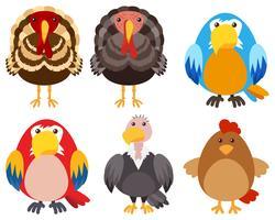 Dindes et différents types d'oiseaux