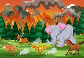 Les animaux sauvages fuient un feu de forêt