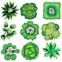 Topview de feuilles vecteur