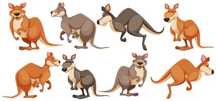 Kangourou dans des poses différentes vecteur