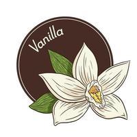 logo de fleur de vanille et modèle d'emblème dans un style vintage vecteur
