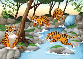 Quatre tigres vivant au bord de la rivière vecteur